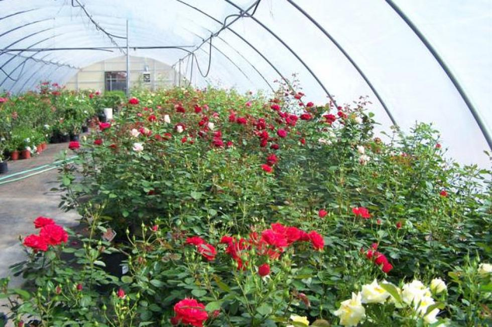 Best Places in San Angelo for Gardening and Landscaping Supplies